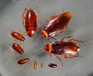 Аллергия на укус таракана фото