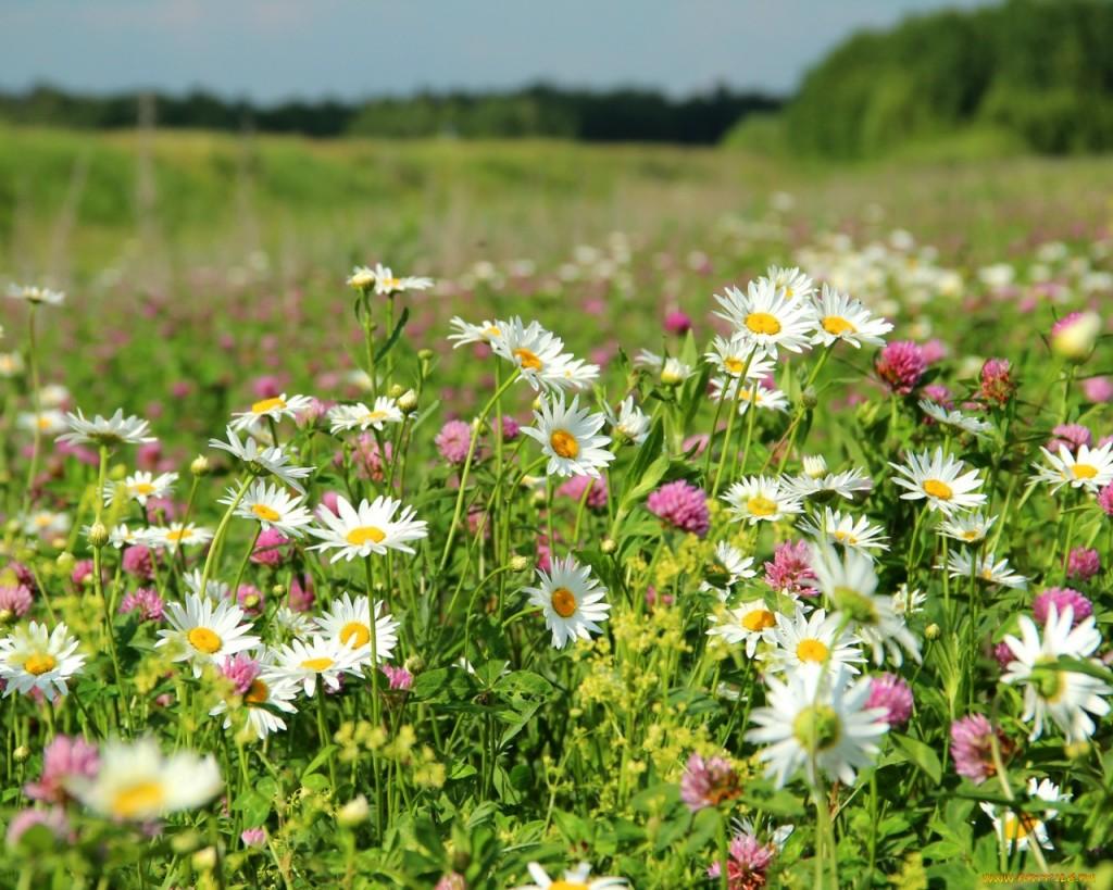 аллергия на пыльцу трав куда поехать